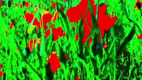 Adieu-au-langage-Jean-Luc-Godard