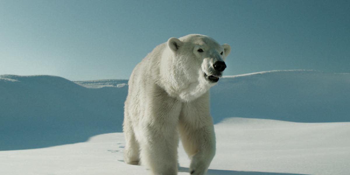 Two Lovers and a Bear : cœurs brûlants dans un décor glacial
